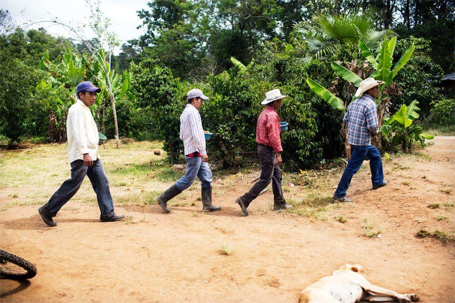 Emiliano and his day laborers return from the fields after harvesting strawberries.