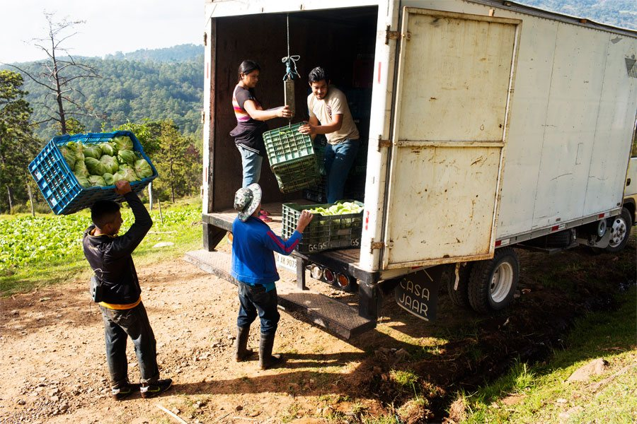 Day labourers load the truck that comes to collect Salomón's harvest