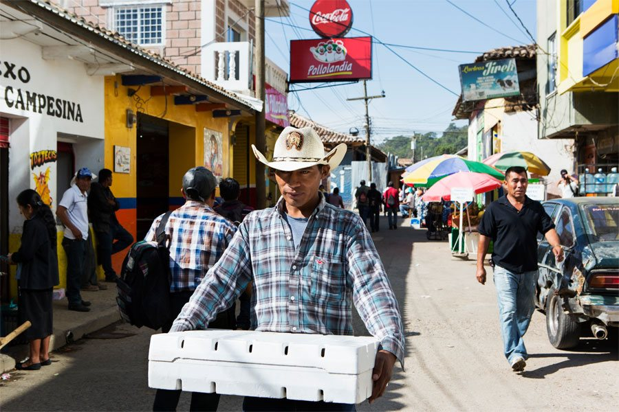 Emiliano on his way to deliver strawberries to a customer at a market in La Esperanza