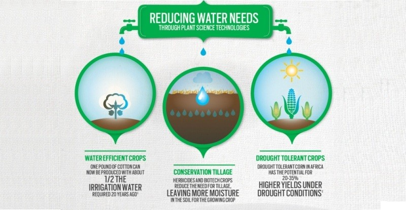 Study_Shows_Environmental_Benefits_of_Biotech_Crop