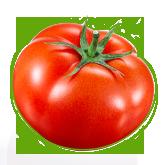 PSP_tomato_thumb