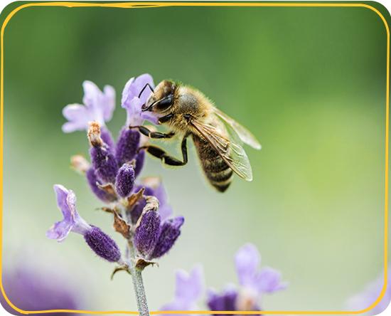 additional_highlights_pollinators