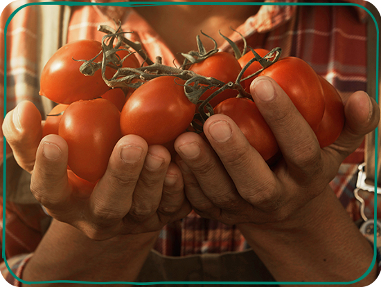 additional_highlights_tomato