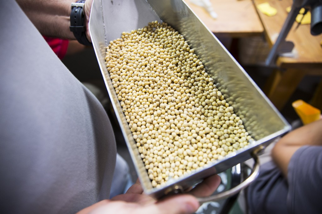 Soya bean seeds, Fontezuela Research Station, Buenos Aires Province, Argentina.