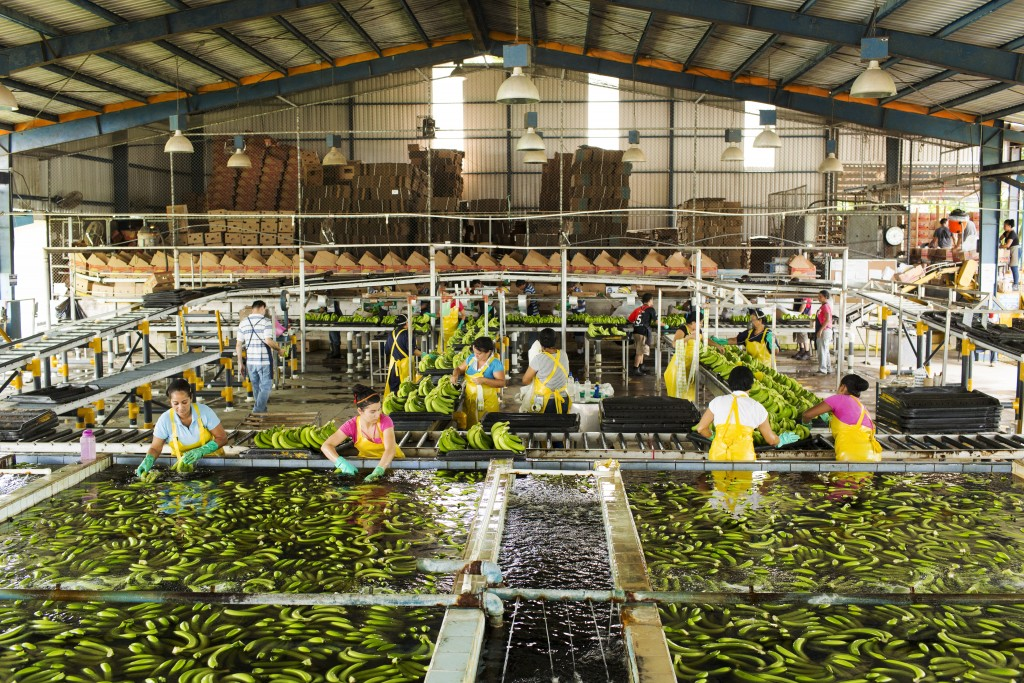 Packing facility at Bananera Calinda S.A. plantation, Guacimo, Limon, Costa Rica