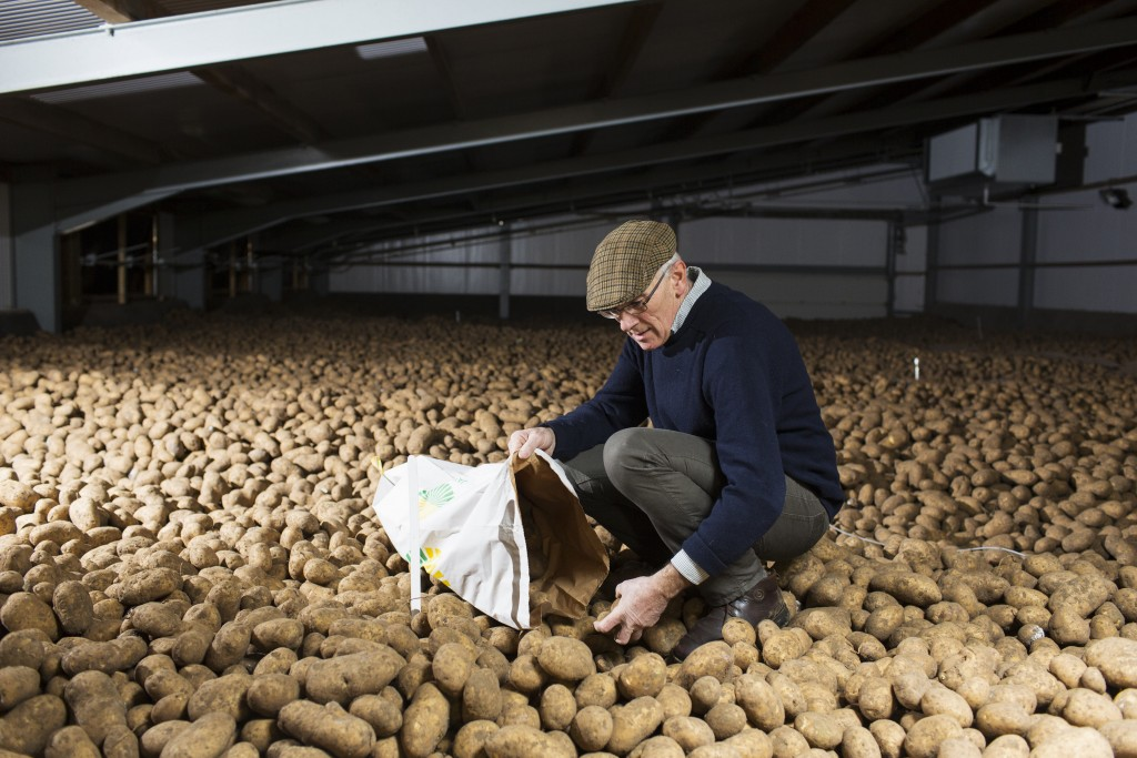 Potato grower Ian Spinks collects a sample of potatoes from a silo at Grove Farm in Langham, Norfolk, England.