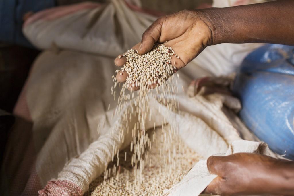 Sorghum seeds, Kiatine Village, Kenya
