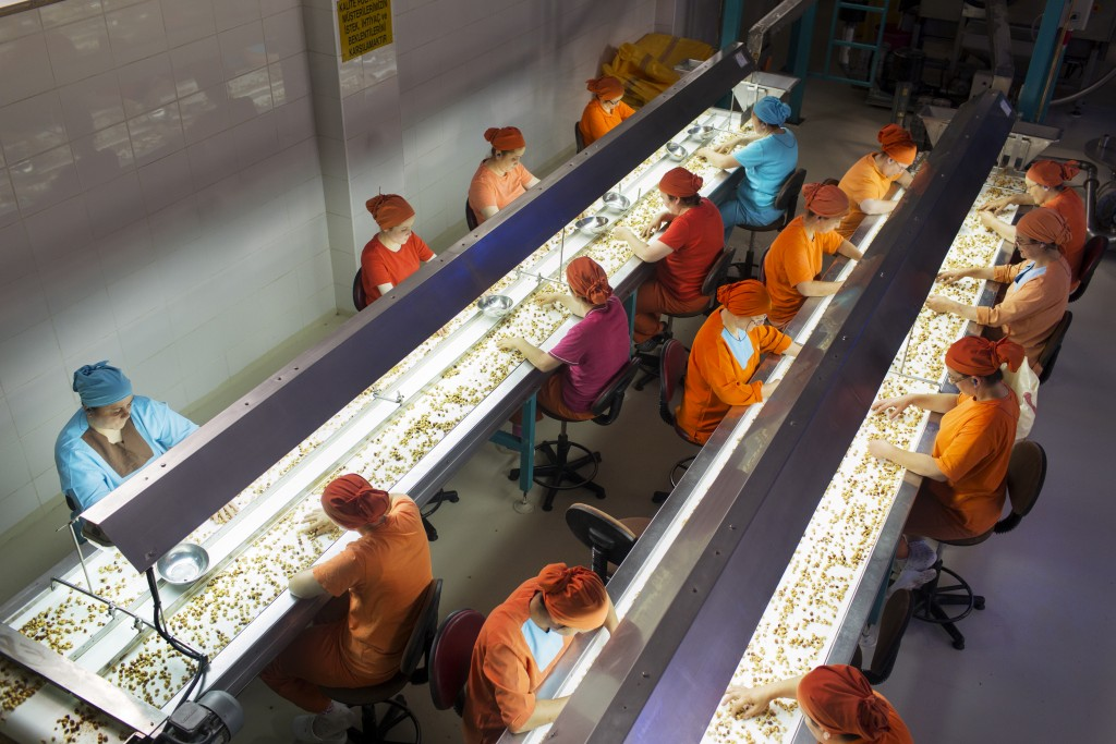 Workers sort hazelnuts on conveyor belts at the Yavuz Hazelnut Products processing plant, Giresun, Turkey.