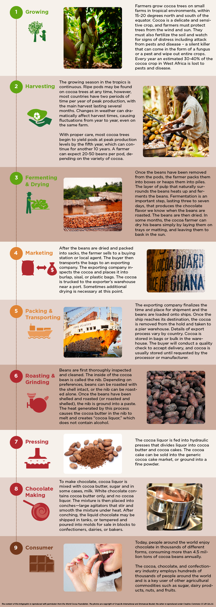 Cocoa Value Chain