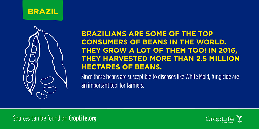 Foodie Facts: Brazil