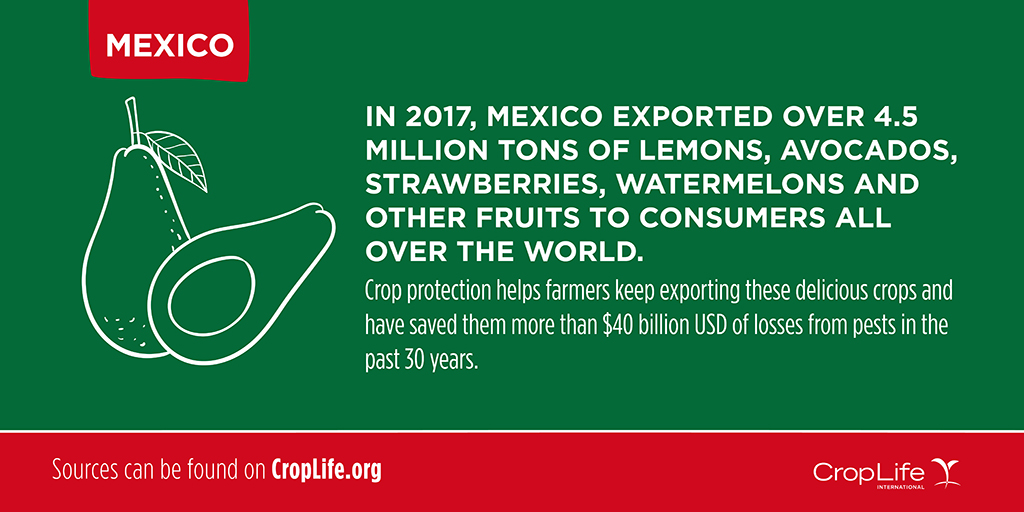 Foodie Facts: Mexico