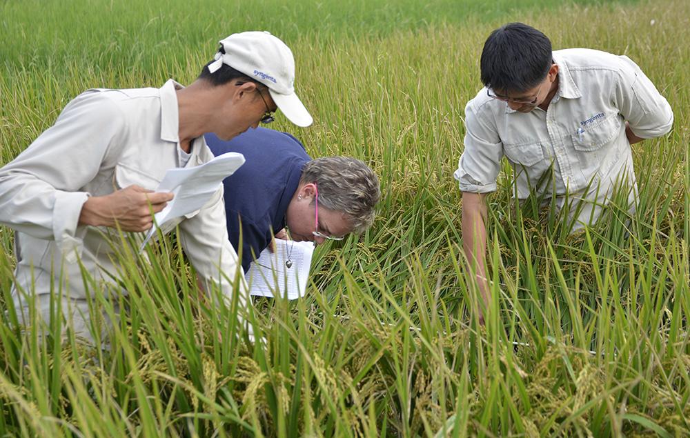 Gina in a rice field in Taiwan